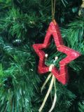 在杉树的红色星 库存图片