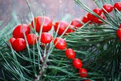 在杉树的红色装饰小珠绿化分支 免版税图库摄影