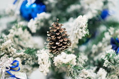 在杉树的锥体与雪 室外 免版税库存图片
