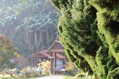 在杉树的阳光 免版税库存图片