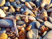 在李子海岛Massachsetts上的海滨海滩 库存照片