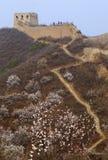在杏子花的长城 库存图片