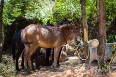 在村庄停放的驴 免版税库存照片