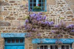 在村庄墙壁上的紫藤在农村法国 库存图片