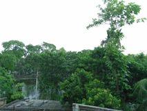 在村庄纯净的森林的绿色 免版税库存照片