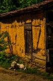 在村庄议院前面的护卫犬 库存照片