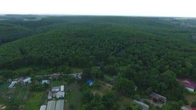在村庄附近的森林丛林 股票视频
