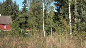 在村庄附近的田园诗农村看法树桦树森林秋天 4K 股票录像