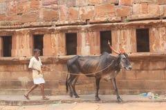 在村庄,印度供以人员乘坐一头公牛 库存图片