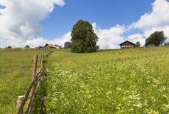在村庄Markovskaya Verhovazhskogo区沃洛格达州地区附近吃草 库存照片