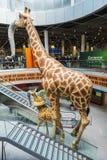 在杜塞尔多夫机场里面的装饰长颈鹿在杜塞尔多夫, Ger 库存图片