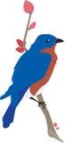 在杜娟花分支的蓝鸫与花蕾 免版税库存照片