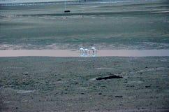 在杜罗河河岸的白鹭日落的 免版税图库摄影