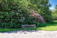 在杜鹃花灌木下的受欢迎的前座统排椅在苏格兰国家步行通过公园 图库摄影