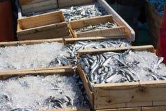 在条板箱和冰的沙丁鱼在鱼市上 库存图片
