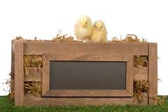 在条板箱的两只小鸡 免版税库存照片
