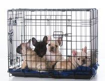 在条板箱的小狗 图库摄影