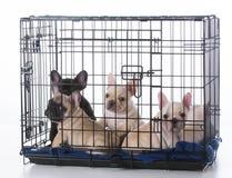 在条板箱的小狗 免版税库存图片