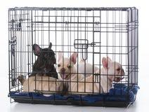 在条板箱的小狗 库存照片