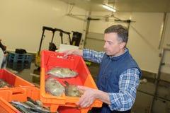 在条板箱的鱼 免版税库存照片