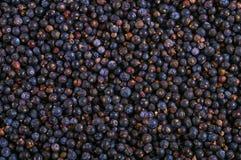 在条板箱纹理-背景的冷冻狂放的蓝莓 库存照片