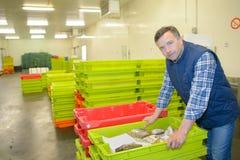 在条板箱里面的鲜鱼 免版税库存照片