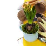 在杯子和园艺工具的春天花 免版税图库摄影