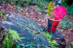 在杯子的三片五颜六色的叶子在老树桩在秋天 图库摄影