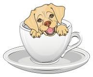在杯子的小狗 免版税库存图片