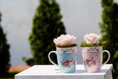 在杯子的桃红色玫瑰 库存图片