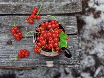 在杯子的红浆果 免版税图库摄影
