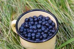 在杯子的蓝莓在草 免版税库存照片