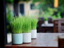 在杯子的绿色叶子 库存照片