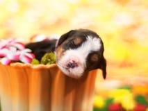 在杯的小狗 图库摄影