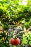 在杯的蕃茄在自然背景的水 免版税库存图片