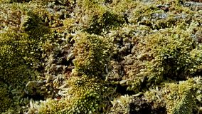 在松树皮肤增长在夏天青苔的一汇集 库存图片
