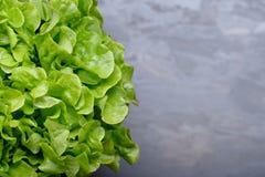 在板岩的莴苣 免版税库存照片