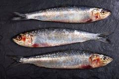 在板岩背景的沙丁鱼 免版税图库摄影