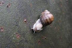 在板料rion的一只蜗牛 免版税图库摄影