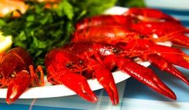 在板材关闭的煮沸的小龙虾  免版税库存照片