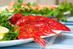 在板材关闭的煮沸的小龙虾  免版税库存图片