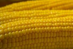 在板材向日葵的鲜美煮沸的玉米-宏指令 库存照片