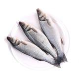 在板材的三条新鲜的雪鱼鱼。 库存图片