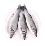 在板材的三条新鲜的雪鱼鱼 免版税库存图片