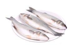 在板材的三条新鲜的雪鱼鱼 免版税库存照片