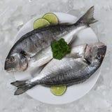 在板材的两条giltheads鱼 库存图片