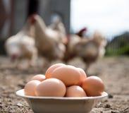 在板材的新鲜的有机鸡蛋 免版税库存图片