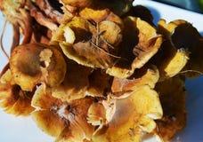 在板材的新鲜的蘑菇,背景 库存图片