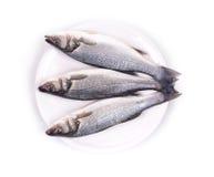 在板材的新鲜的雪鱼鱼 免版税库存图片