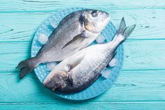 在板材的未加工的dorado鱼有冰的 免版税库存图片